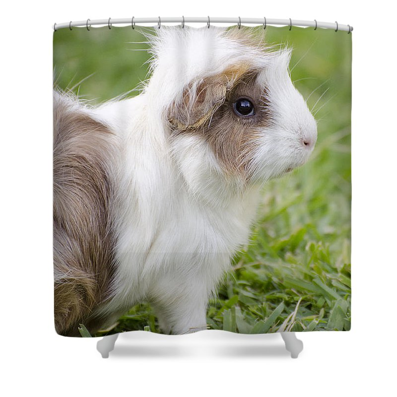 Guinea Pig Shower Curtain featuring the photograph It Was My Punk Phase by Jim And Emily Bush