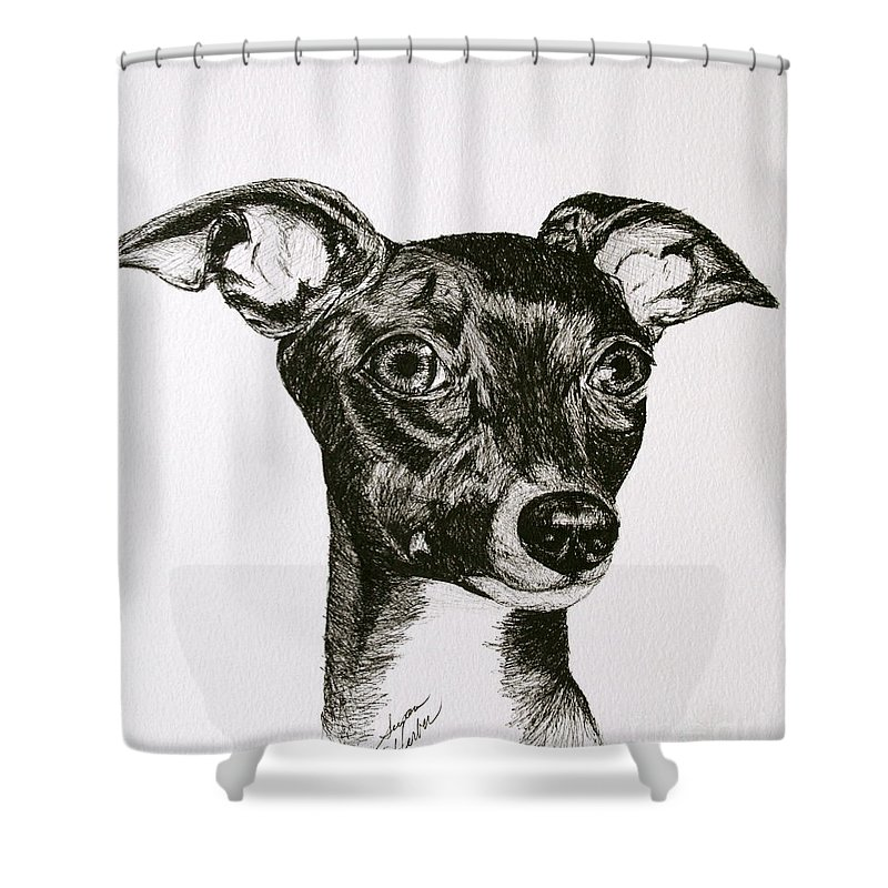Ig Shower Curtain featuring the drawing Italian Greyhound by Susan Herber