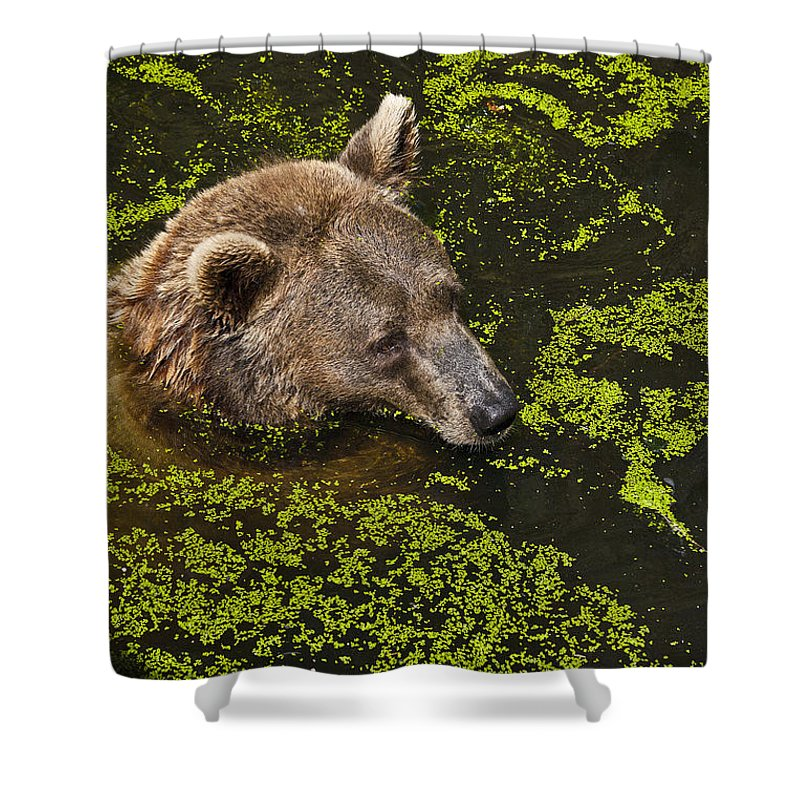 Nature Shower Curtain featuring the photograph It's Cool In Here by Heiko Koehrer-Wagner