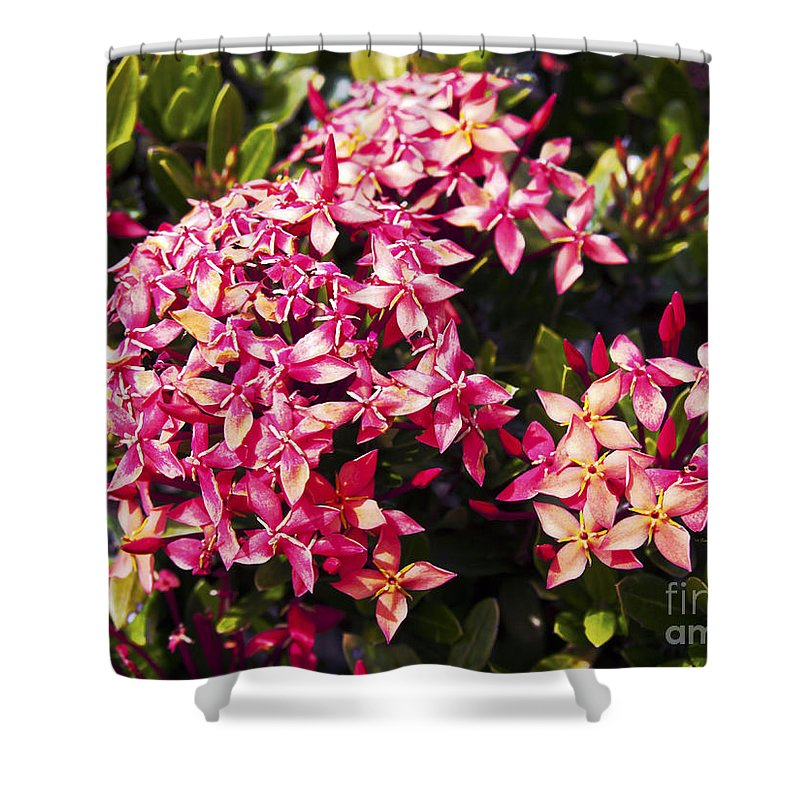 Fine Art Photography Shower Curtain featuring the photograph Ixora by Patricia Griffin Brett