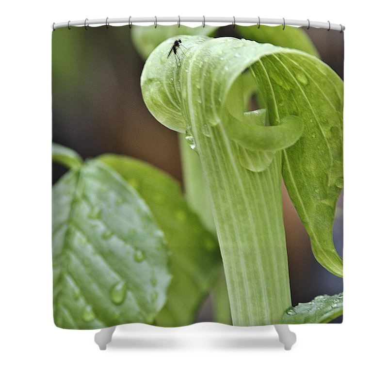 Usa Shower Curtain featuring the photograph Jack Fly by LeeAnn McLaneGoetz McLaneGoetzStudioLLCcom