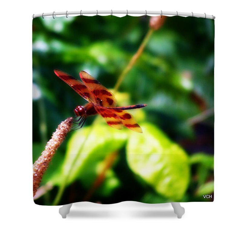 Nature Shower Curtain featuring the photograph Just A Taste Of Nature by Veronica Henson