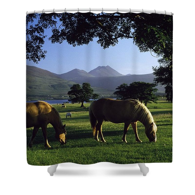 Kerry Shower Curtain featuring the photograph Killarney,co Kerry,irelandtwo Horses by The Irish Image Collection