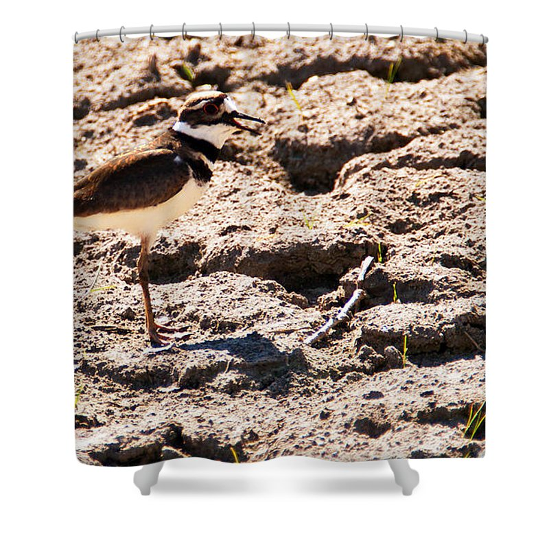 Wildlife Shower Curtain featuring the photograph Killdeer Pitching A Fit by Edward Peterson