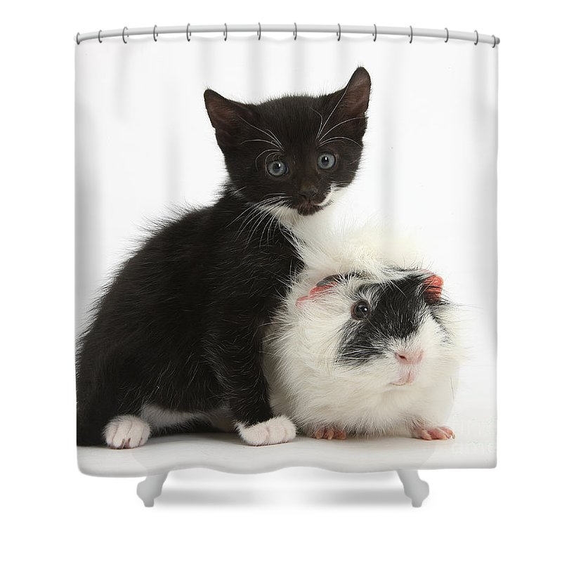 Nature Shower Curtain featuring the photograph Kitten And Guinea Pig by Mark Taylor