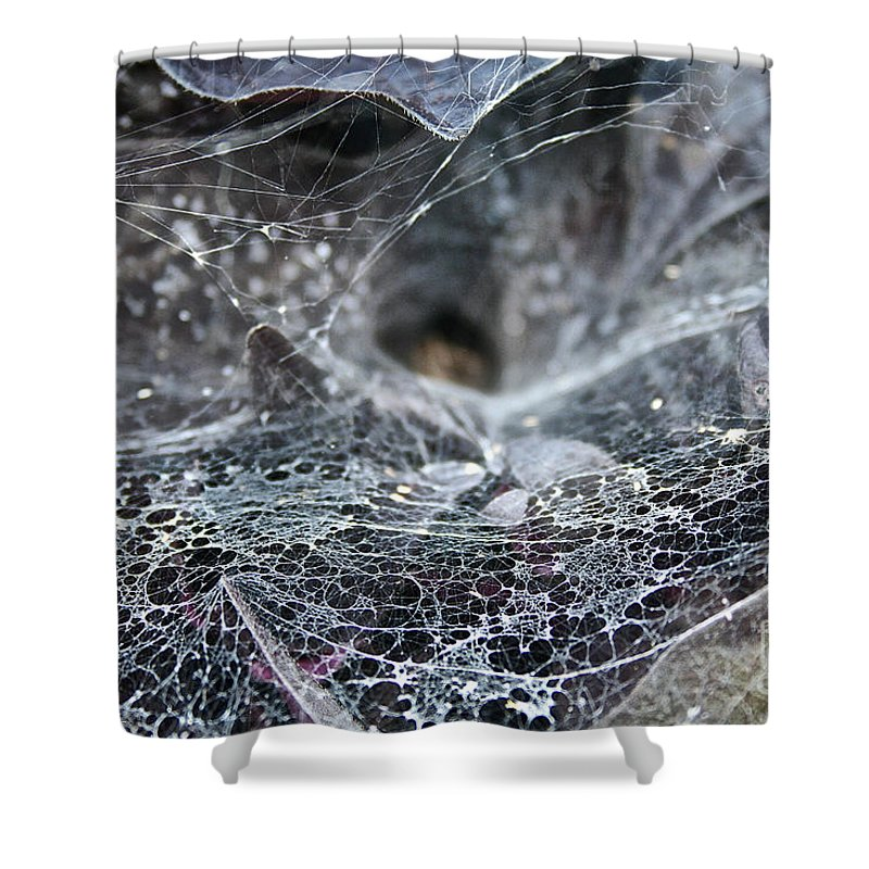 Outdoors Shower Curtain featuring the photograph Lacey Lurker by Susan Herber