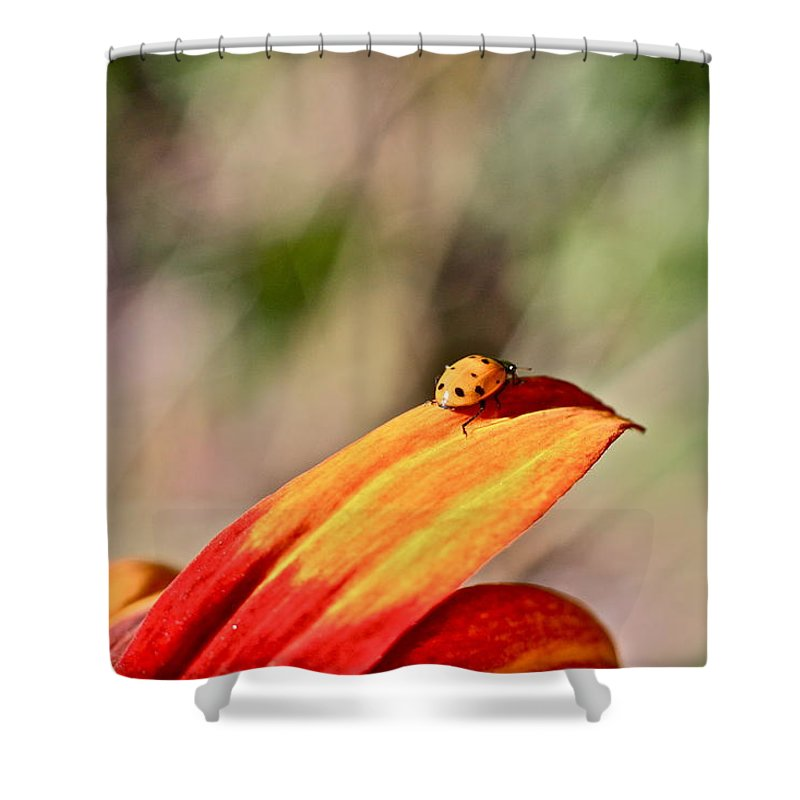 Lady Shower Curtain featuring the photograph Lady Bug On A Flower by Seth Solesbee