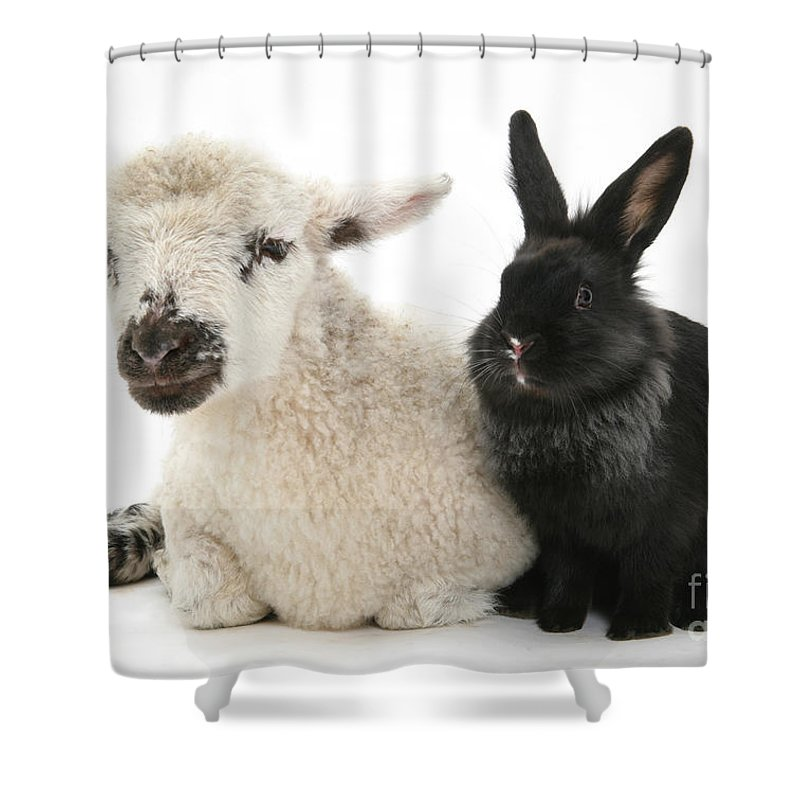 Animal Shower Curtain featuring the photograph Lamb And Rabbit by Mark Taylor