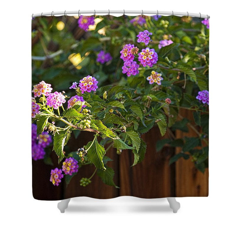 Lantanas Shower Curtain featuring the photograph Lantanas by Jay Hooker