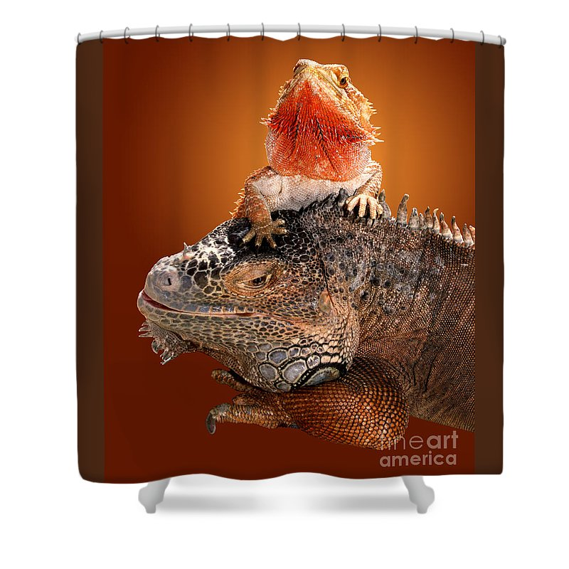 Bearded Dragon Shower Curtain featuring the photograph Lap Lizard by Jim Carrell