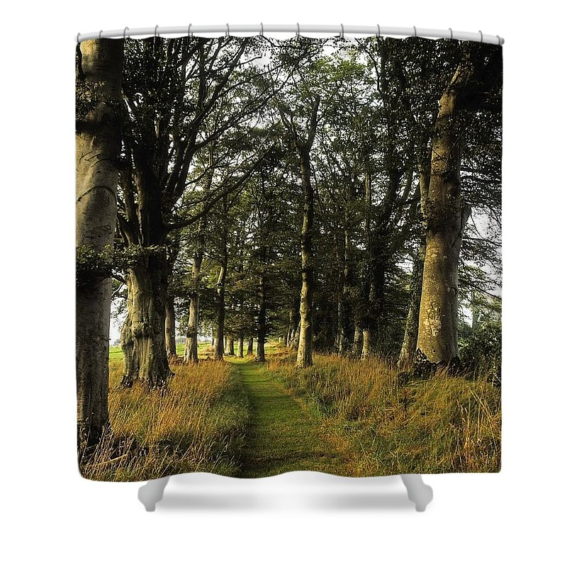 Tree Shower Curtain featuring the photograph Larchill Arcadian Garden, County by The Irish Image Collection