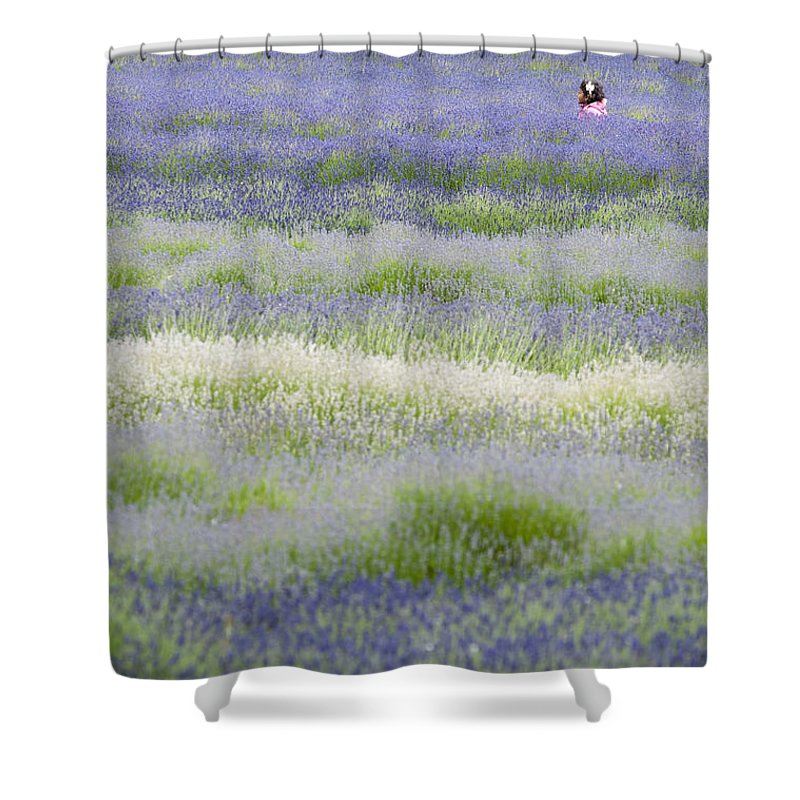 Britain Shower Curtain featuring the photograph Lavender Field by Andrew Michael
