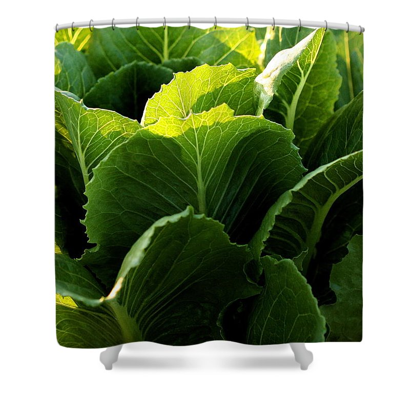 Garden Shower Curtain featuring the photograph Layers Of Romaine by Angela Rath