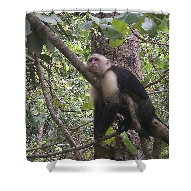 Costa Rica Shower Curtain featuring the photograph Lazy Day by David Gleeson