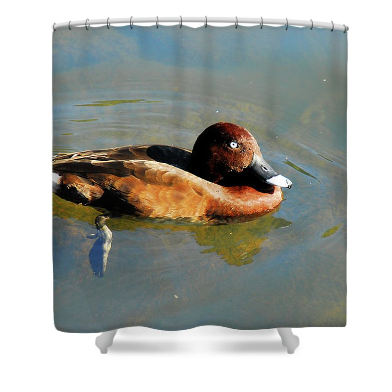 Duck Shower Curtain featuring the photograph Lazy Duck Days by Georgiana Romanovna