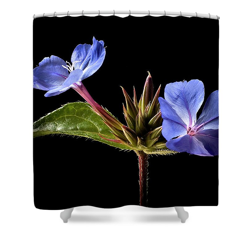 Flower Shower Curtain featuring the photograph Leadwort by Endre Balogh