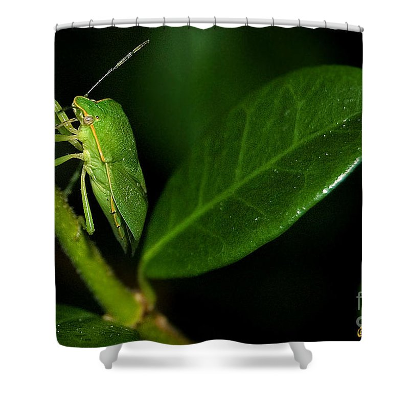 Photography Shower Curtain featuring the photograph Leaf Me Alone by Susan Smith