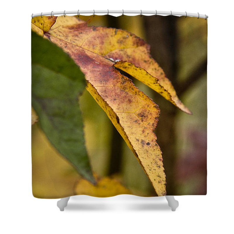 Fall Shower Curtain featuring the photograph Leaves Of Fall by Kacy Taylor