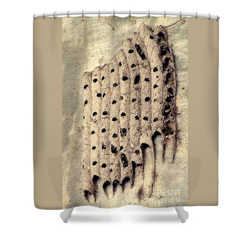 Mud Dauber Nest Shower Curtain featuring the photograph Left Behind by Joe Jake Pratt