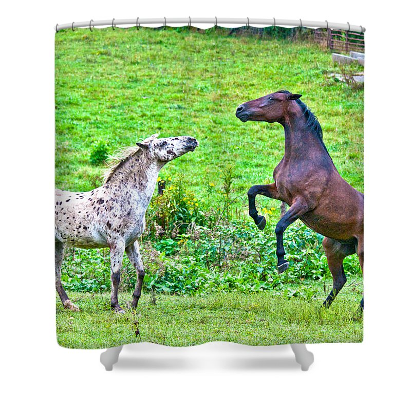 Leopard Shower Curtain featuring the photograph Leopard V Standardbred by Betsy Knapp