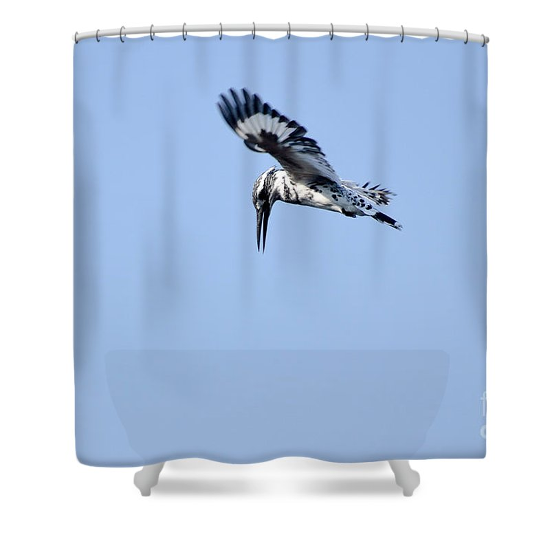 2830 Shower Curtain featuring the photograph Lesser Pied Kingfisher by Fotosas Photography