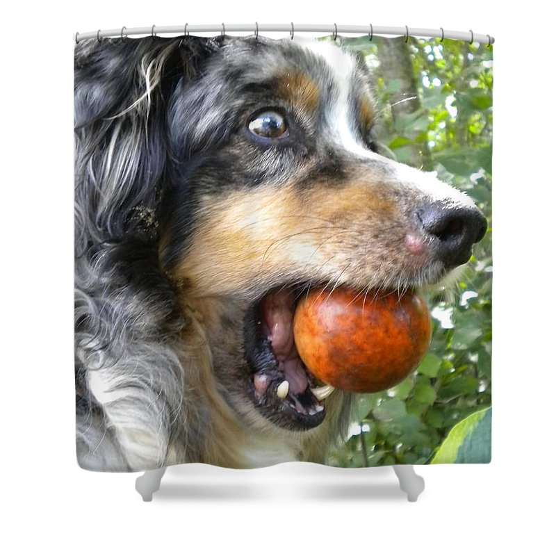 Dog Shower Curtain featuring the painting Lets Play by Renate Nadi Wesley