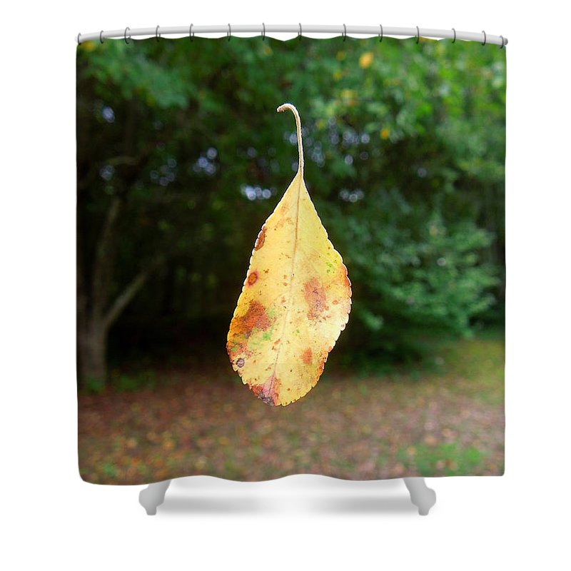Leaf Shower Curtain featuring the photograph Levitation by Renee Trenholm