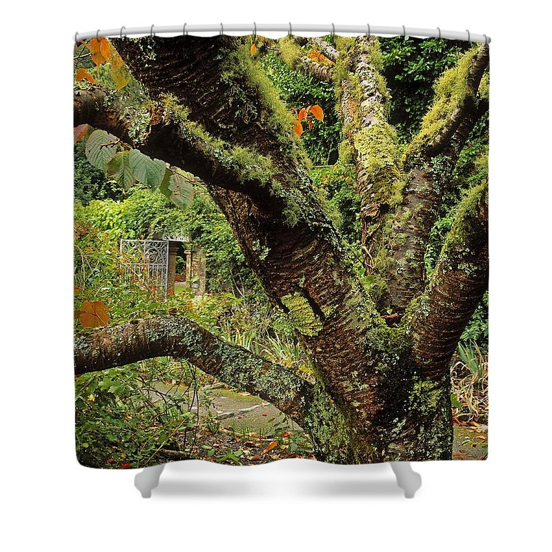 Architectural Detail Shower Curtain featuring the photograph Lichen Covered Apple Tree, Walled by The Irish Image Collection