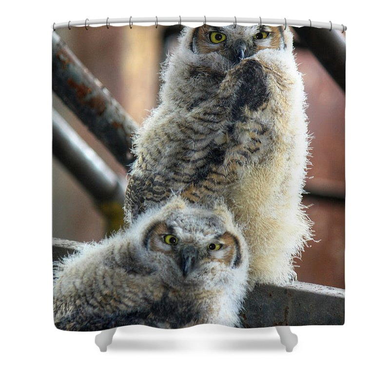 Bird Shower Curtain featuring the photograph Life After People by Lori Deiter