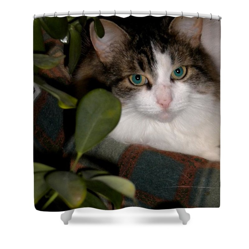 Cat Shower Curtain featuring the photograph Lila's Nest by Renate Nadi Wesley
