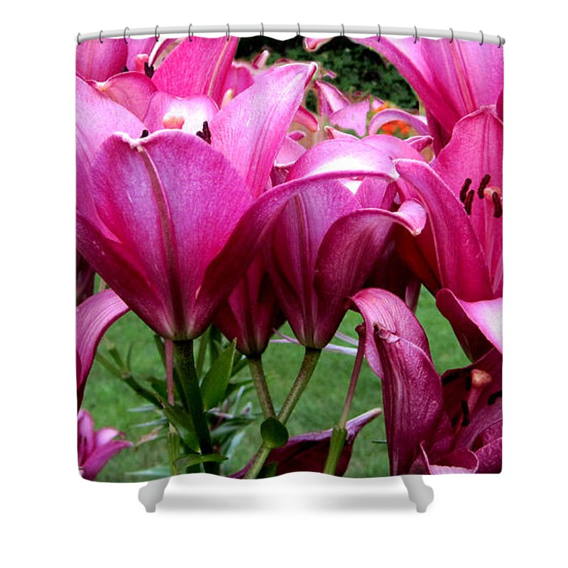 Beauty Close Up Color Image Concept Environment Flower Growth Vertical Illustration Illustration And Painting Leaf Nature Nobody Red Spring Tropical Two Objects Blooming Close-up Color Colour Development Drawing Natural Plant Springtime Tropics Flower Lilies Decorative Art Photo Shower Curtain featuring the photograph Lilies by Leon Zernitsky