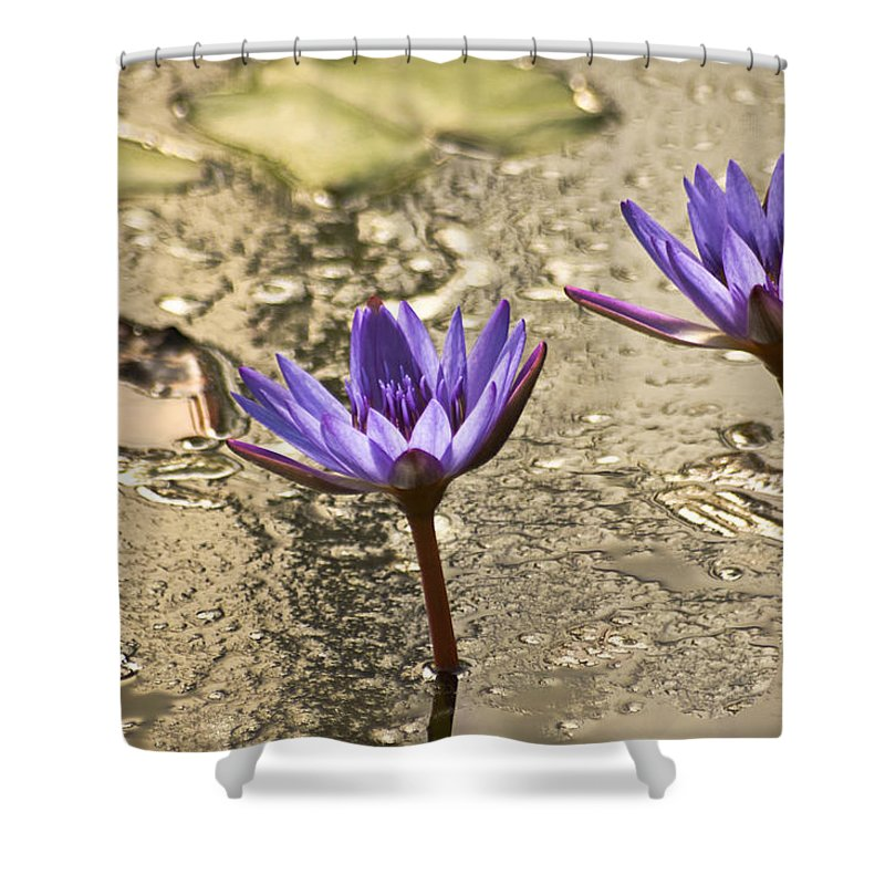 Lily Shower Curtain featuring the photograph Lily Twins by Carolyn Marshall