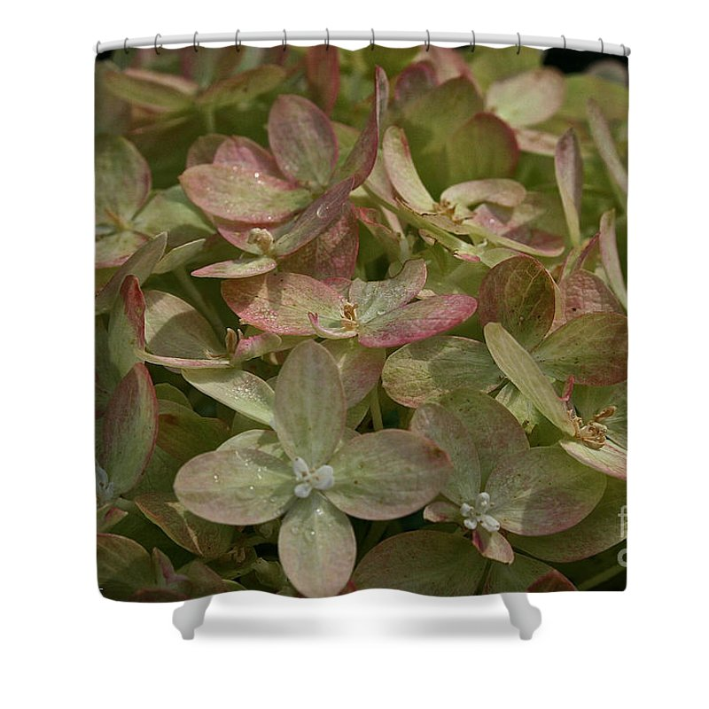 Outdoors Shower Curtain featuring the photograph Limelight by Susan Herber