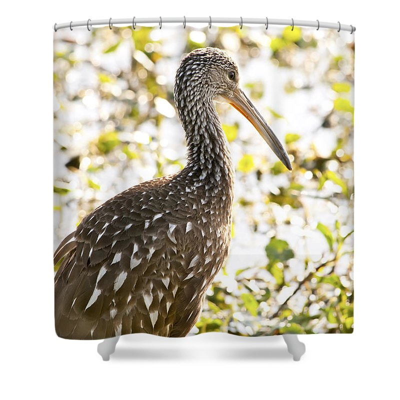 Limpkin Shower Curtain featuring the photograph Limpkin Luster by Steven Sparks
