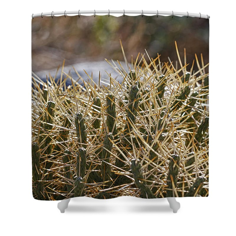 Century Plant Shower Curtain featuring the photograph Little Devil by Linda Dunn