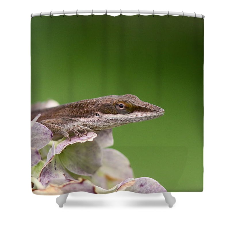 Shower Curtain featuring the photograph Little Komodo by Travis Truelove