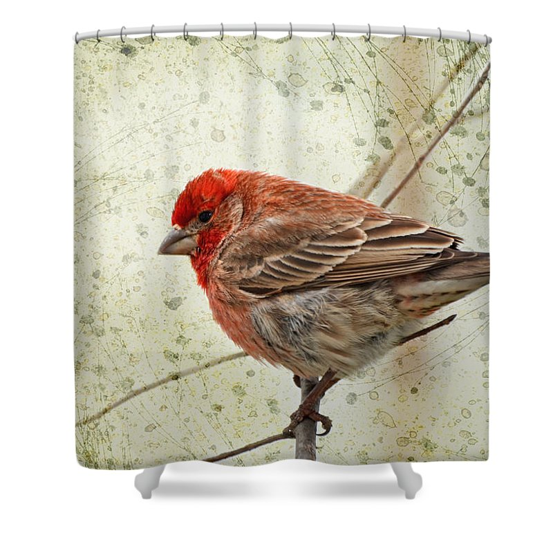Nature Shower Curtain featuring the photograph Little Prince I by Debbie Portwood