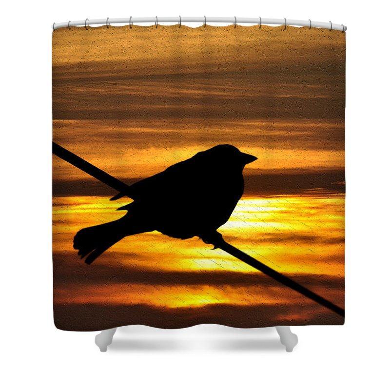 Little Shower Curtain featuring the photograph Little Sparrow by Bill Cannon