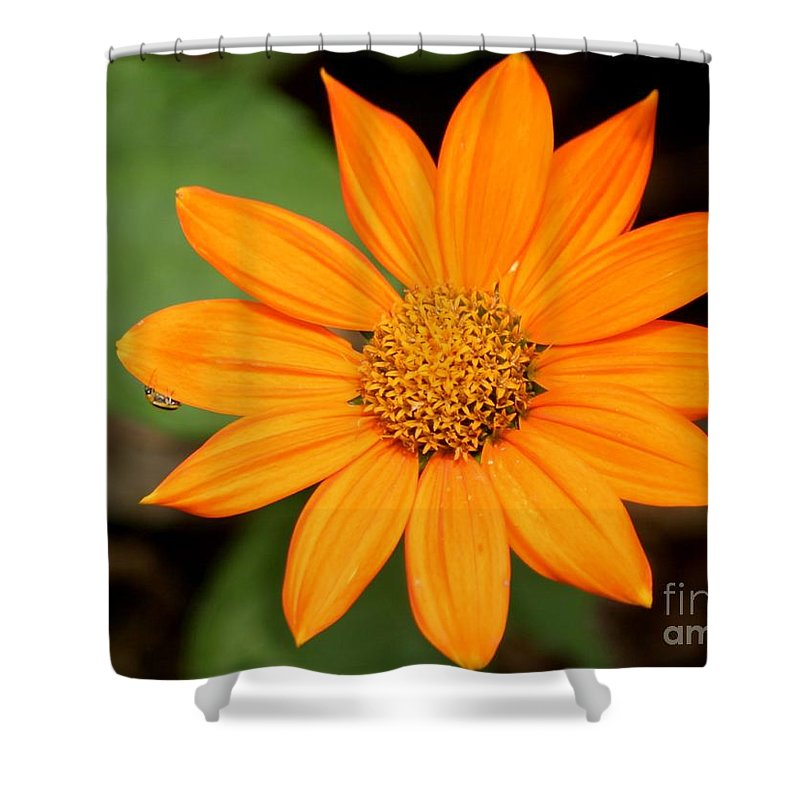 Floral Shower Curtain featuring the photograph Living Life On The Edge by Living Color Photography Lorraine Lynch