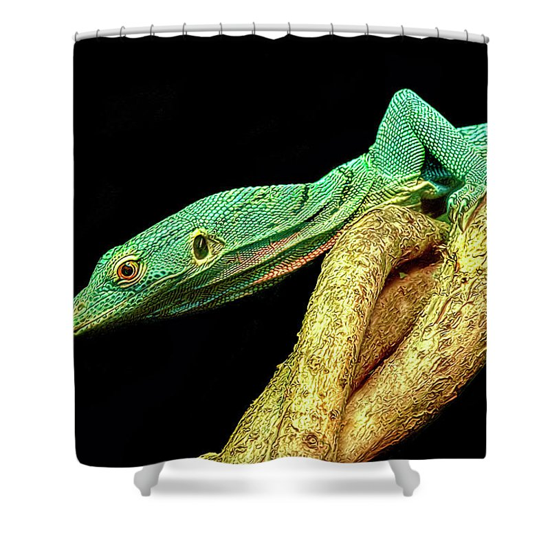 Lizard Shower Curtain featuring the photograph Lizard by Dave Mills