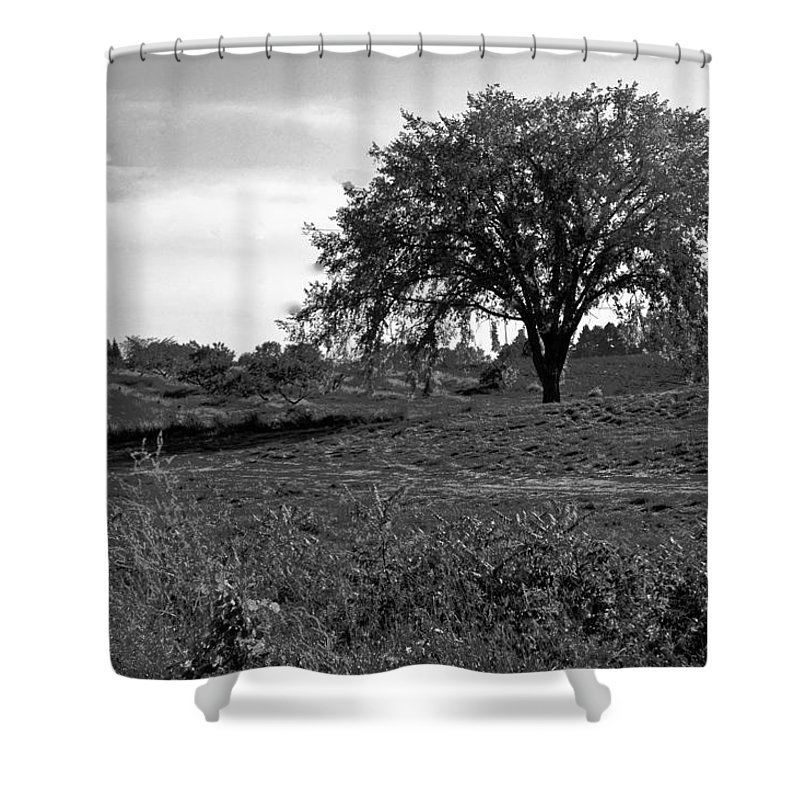 Usa Shower Curtain featuring the photograph Lone Tree by LeeAnn McLaneGoetz McLaneGoetzStudioLLCcom