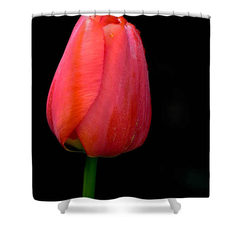 Flower Shower Curtain featuring the photograph Lonely Tulip by Jean Noren
