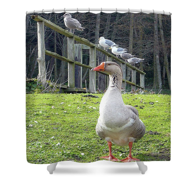 Animals Shower Curtain featuring the photograph Lookin South by Lauren Leigh Hunter Fine Art Photography