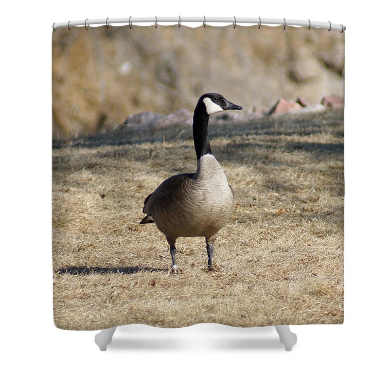 Goose Shower Curtain featuring the photograph Looking Around by Lori Tordsen