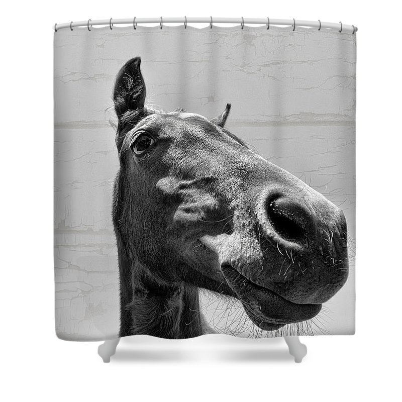 Horse Shower Curtain featuring the photograph Looking Down At You by Douglas Barnard
