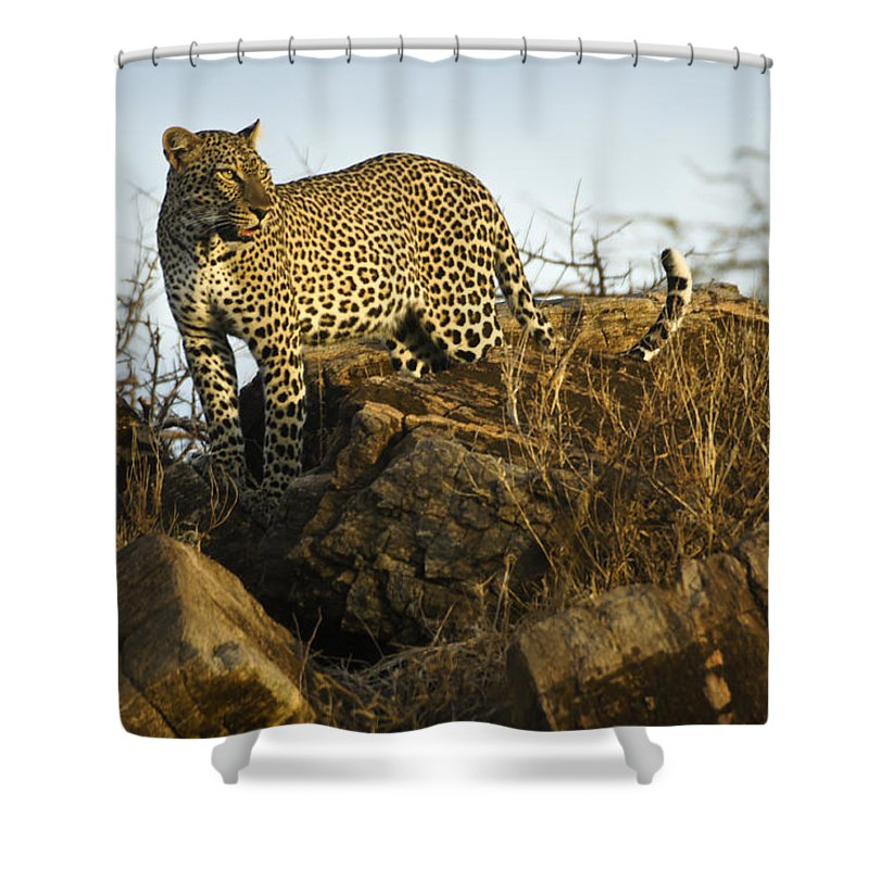 Africa Shower Curtain featuring the photograph Looking For Breakfast by Michele Burgess