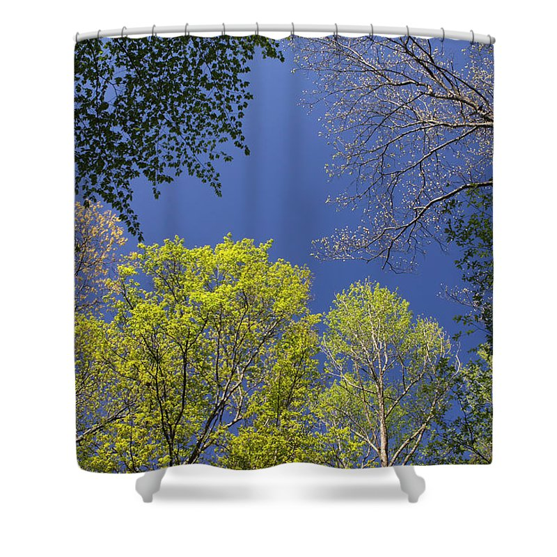 Tree Shower Curtain featuring the photograph Looking Up In Spring by Daniel Reed