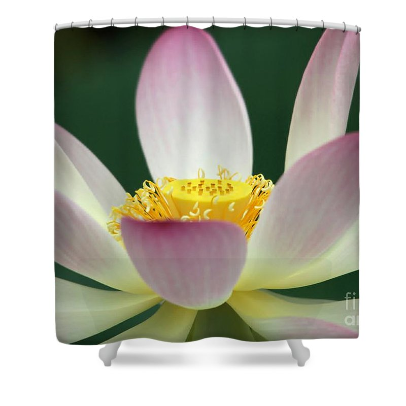 Lotus Shower Curtain featuring the photograph Lotus Diva by Sabrina L Ryan