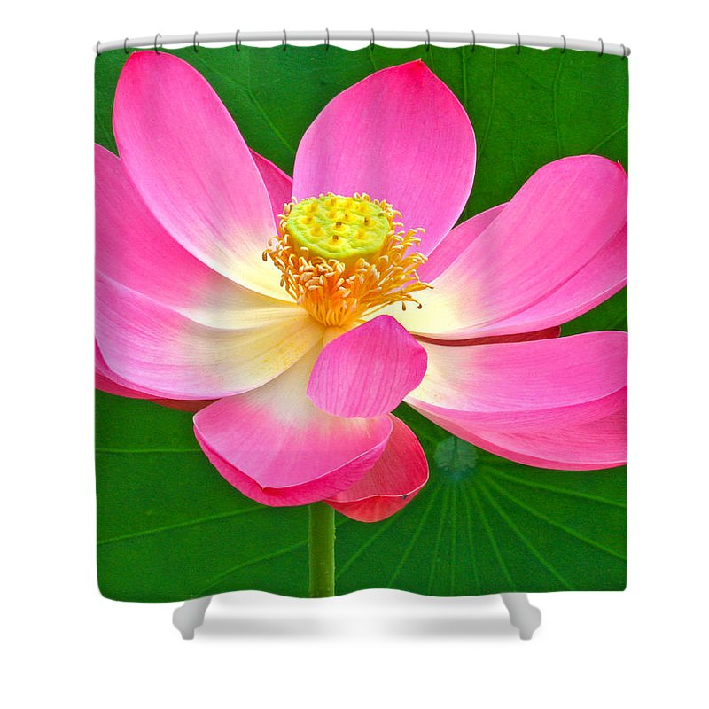 Flower Shower Curtain featuring the photograph Lotus by Jean Noren