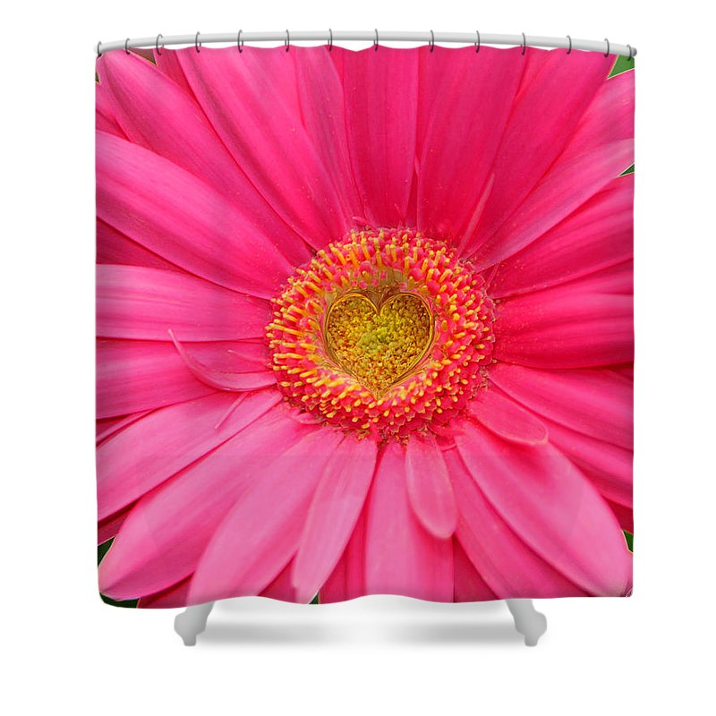 Pink Shower Curtain featuring the photograph Love Daisy by Diana Haronis